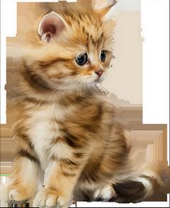 Chat.Chaton.Cat